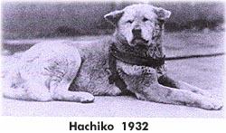hachiko2