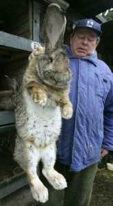 giant-rabbit1