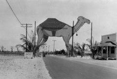 camel-2100
